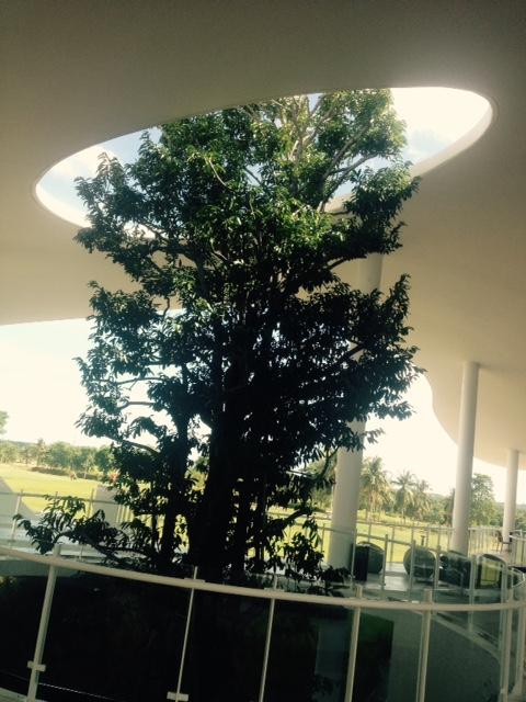 木が抜ける